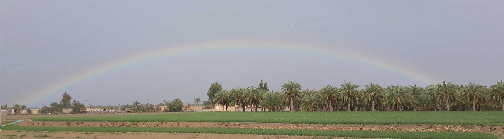 Rainbow-palm-Doosto